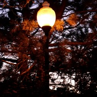 lit-street-lamp-among-pine-branches-at-dusk-190x190